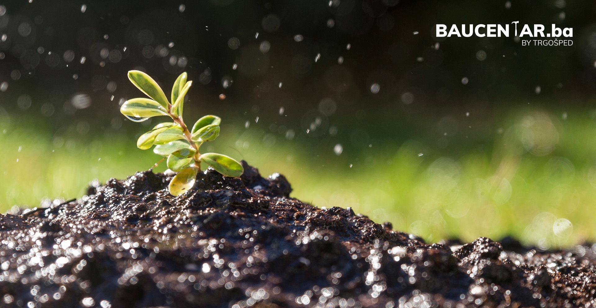 Kako zaštiti voće i povrće poslije kiše?