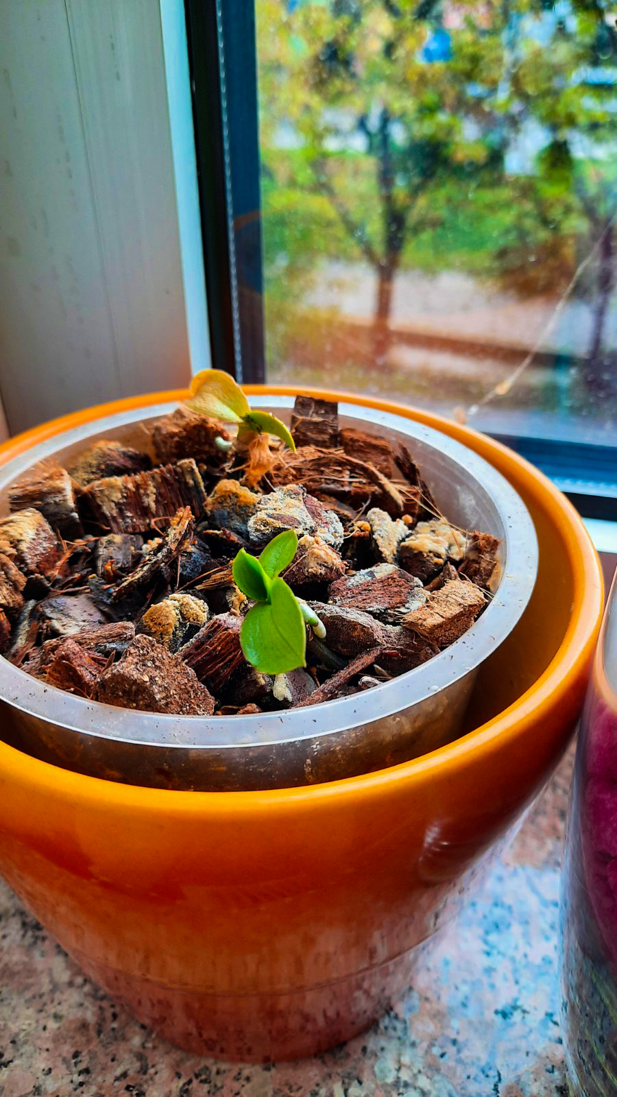 ORCHID MASTERS/ Kako pravilno njegovati Orhideje